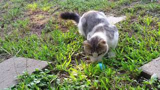 Cat and kittens playing in the yard