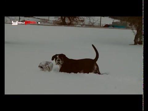 Animali e neve. Come possiamo aiutarli