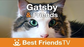 Best Friends TV Episode 8: Gatsby & Friends