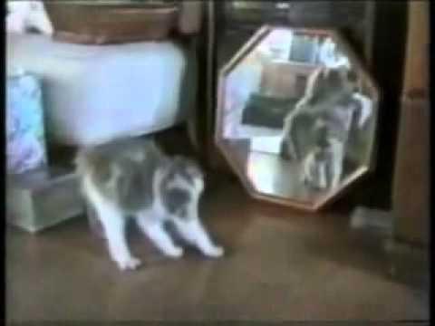 I gatti più pazzi del web