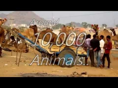 Please Watch Our Video and Share as much as possible *Pushkar Camel Fair, Camel Fair Pushkar, Pushkar Fair 2017, Pushkar Camel Fair 2017, 30 Oct Till 4Nov Pushkar Camel Fair* https://www.youtube.com/w