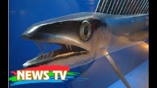 10 loại cá tiền sử vẫn tồn tại tới tận ngày nay