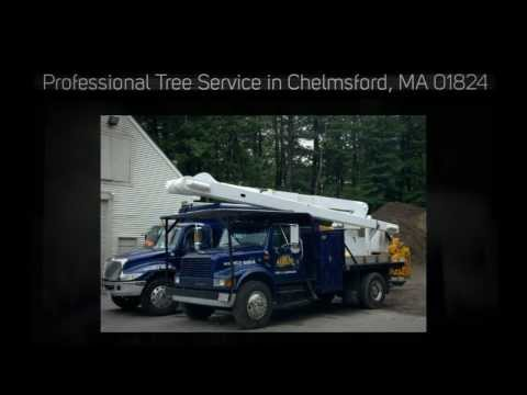 Tree Removal Pruning Service 01824