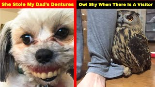 Hilarious Photos That Prove Once You Get A Pet You Will Never Be Sad Again