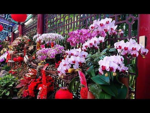 2021新春應景花卉.蘭花展-士林官邸新蘭亭 Taiwan Spring Festival Orchid Show
