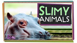 Animal Slime and Other Weird Stuff
