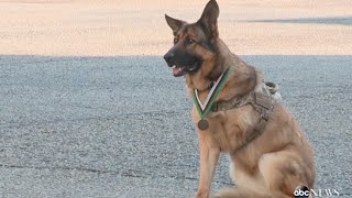 6 Dogs That Prove They Are Truly Man's Best Friend | ABC News Remix