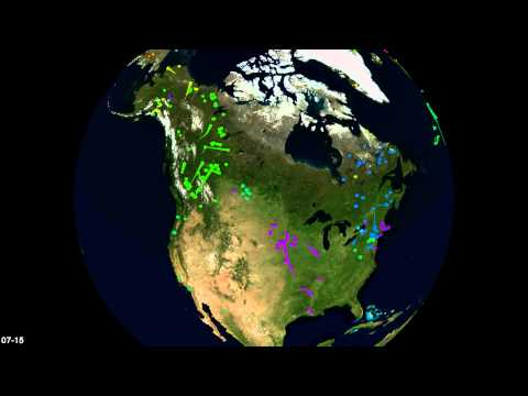 Bird migrations in Movebank: Americas