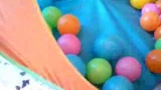 Hurón en una piscina de bolas