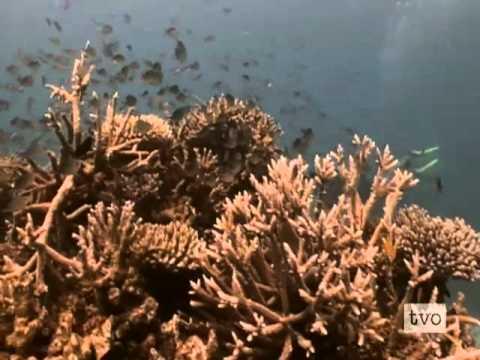 TVOKids - A World of Wonders: Great Barrier Reef