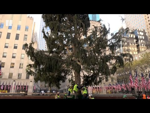 Rockefeller Center's Scraggly Christmas Tree Is Perfect For 2020