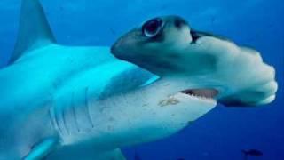 鮫スライドショー5