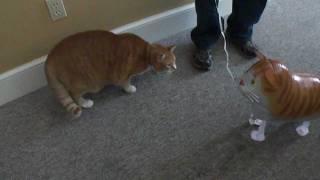 Bert the Cat vs Cat Balloon