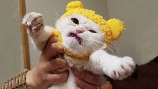 🤣 Funniest And Cutest 🐶 Dogs And Cats 😻 Funny Pet Animals' Life 😇