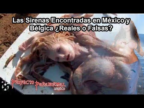 Las Sirenas Encontradas en México y Bélgica ¿Reales o Falsas?