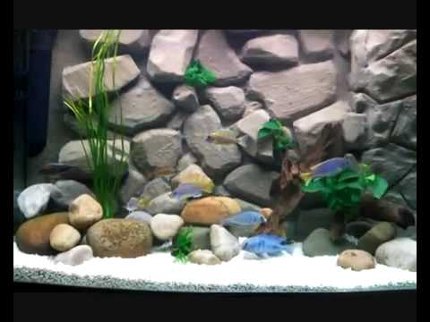 3d Aquarium Background Youtube 3d Aquarium Background