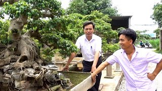 Sanh trực hoành rất đẳng cấp giá hợp lý - Price of wonderful bonsai tree in Truong My, Ha Noi