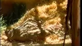Phim Hoàng Hậu Esther Tập 1