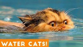 Funniest Cats Playing in Water Compilation 2018 | Funny Pet Videos