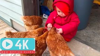 TRY NOT TO LAUGH: MOST Crazy Chicken  Trolling Babies and Kids  Funny Babies and Pets