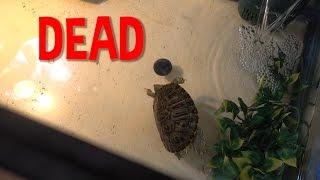 rip-skrt-the-turtle.jpg