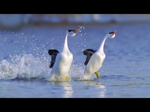 MOST BEAUTIFUL WALTZ EVER - Waltz of Love by Ernesto Cortazar
