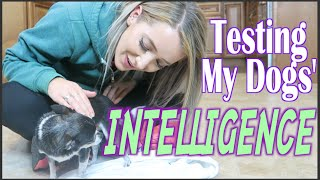 Testing My Dogs' Intelligence