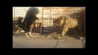 When Dogs Come Face To Face With Wild Animals!!!