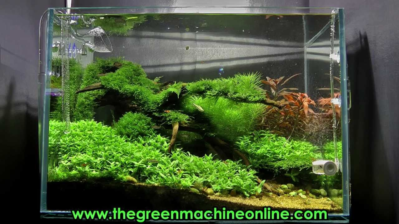 Riverbank Aquascape @ The Green Machine by James Findley ...