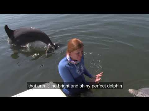 Veteran Honor Andruzzi shares her virtual experience with dolphins during a recent Wounded Warrior Project event with Dolphin Research Center.