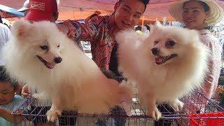 Khám phá chợ bán chó mèo cảnh với những giống chó to nhất thế giới