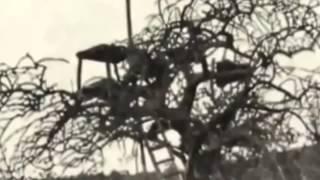 Especial Documental de Leones   Los Leones come Hombres    National Geographic