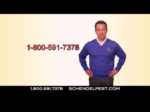 schendel pest termite commercial