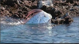 Đi dạo biển nhìn thấy cá lạ dạt vào bờ, vội chụp khoe mẹ ai ngờ mẹ hốt hoảng 'Chạy ngay đi'