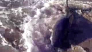 ホオジロザメ14