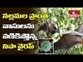 Nipah virus scare in Nallamala forests