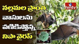 Nipah virus scare in Nallamala forests..