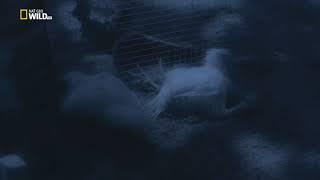 Anakonda - tichý zabijak