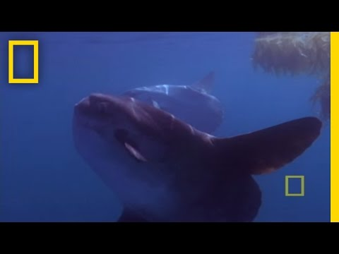 Giant Bizarre Fish