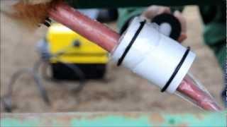 Extracción de semen y analítica de trichomonas y campilobacter en toro rubio gallego