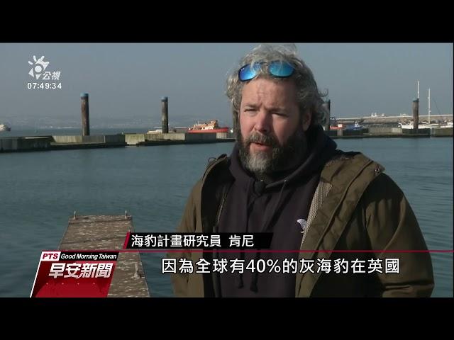 App追蹤灰海豹 英國集眾人之力保育