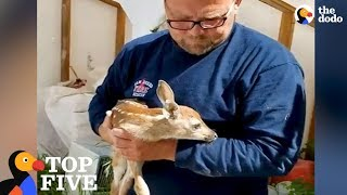Baby Deer Keeps Revisiting Man Who Rescued Him From Hole: Animal Family Compilation | The Dodo Top