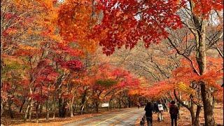 Autumn in Korea 2018