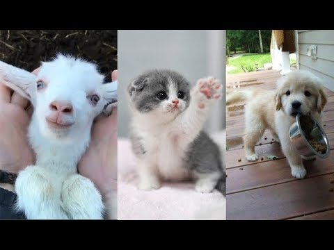 Cute baby animals Videos Compilation cute moment of the animals - Soo Cute! #13