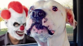 Funny Dogs Scared of Masks Compilation