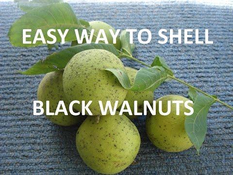 how to make wormwood tincture