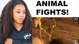 14 CRAZIEST ANIMAL HEATED MOMENTS CAUGHT ON CAMERA | Reaction