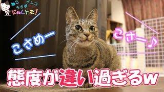 飼い主によって態度を変える猫 - Cat changing attitude by owner