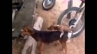 Chịch Chó Mẹ