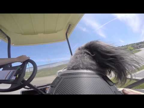 A dog's perspective of Predator Ridge